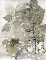 Birch Leaves I Framed Print