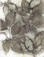 Dogwood Leaves III Fine Art Print