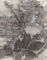 Multi Leaves I Framed Print