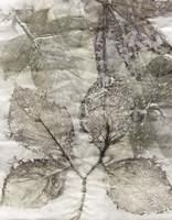 Multi Leaves II Framed Print