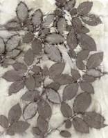 Rose Leaves Fine Art Print