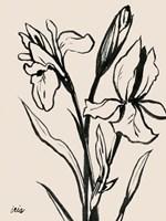Iris Sketch IV Framed Print
