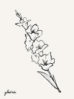 Gladiola Sketch I Framed Print