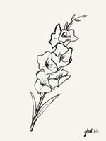 Gladiola Sketch II Framed Print