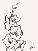 Gladiola Sketch III Framed Print