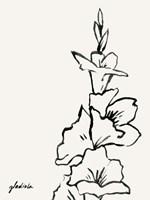 Gladiola Sketch IV Framed Print