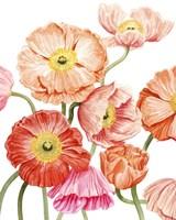 Bright Poppies I Framed Print