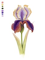 Rainbow Iris I Framed Print