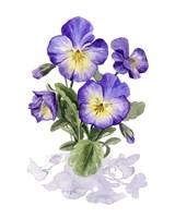 Viola Pansies I Fine Art Print