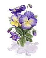 Viola Pansies II Fine Art Print