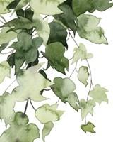 Emerald Vines I Fine Art Print