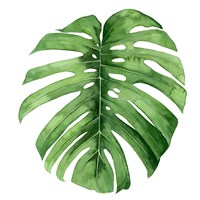 Rainforest Jewel IV Framed Print