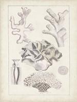 Antique White Coral IV Framed Print