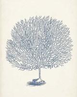Antique Coral Collection I Fine Art Print