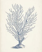 Antique Coral Collection II Fine Art Print
