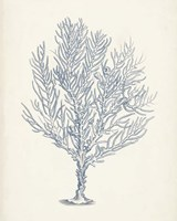 Antique Coral Collection III Fine Art Print