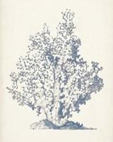 Antique Coral Collection IV Fine Art Print