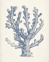Antique Coral Collection VI Fine Art Print