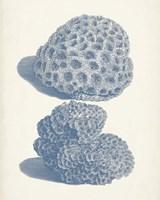 Antique Coral Collection VIII Fine Art Print