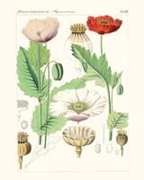 Bright Botanicals II Fine Art Print