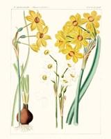 Bright Botanicals III Fine Art Print