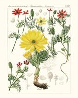 Bright Botanicals IV Fine Art Print