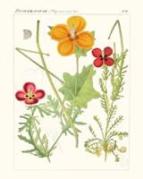 Bright Botanicals V Fine Art Print