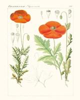 Bright Botanicals VI Fine Art Print