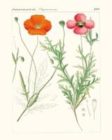 Bright Botanicals IX Fine Art Print