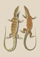 Antique Lizards I Fine Art Print