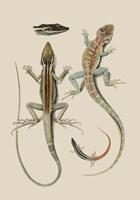 Antique Lizards II Fine Art Print