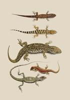 Antique Lizards III Fine Art Print