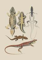 Antique Lizards IV Fine Art Print
