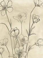 Vintage Wildflowers II Framed Print