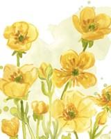 Sunshine Meadow I Framed Print