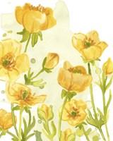 Sunshine Meadow II Framed Print