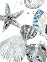 Cerulean Seashells II Framed Print