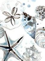 Cerulean Seashells IV Framed Print