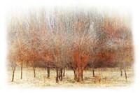 Row of Red Trees Fine Art Print