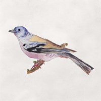 Bird Sketch II Framed Print