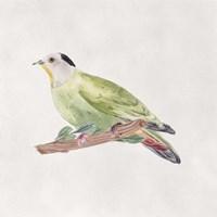 Bird Sketch III Framed Print