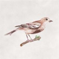 Bird Sketch IV Framed Print