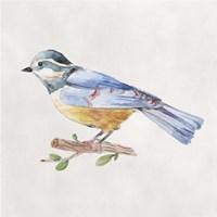 Bird Sketch V Framed Print