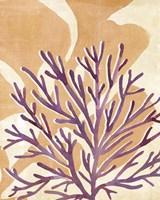 Chromatic Sea Tangle II Framed Print