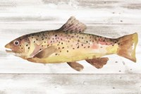 Spotted Trout I Framed Print