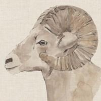 Bighorn Profile I Framed Print