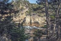 Pines and Coast Point Lobos Fine Art Print