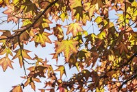 A Face Of Autumn 1 Fine Art Print