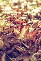 A Face Of Autumn 2 Fine Art Print