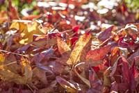 A Face Of Autumn 3 Fine Art Print